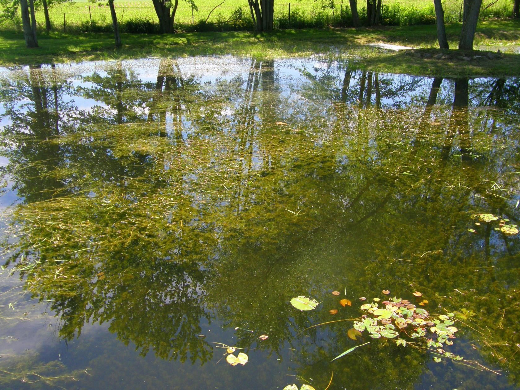 pond before pond cleaning by Aquatic Weed Control